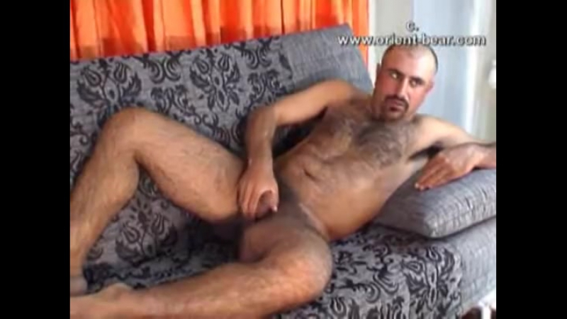Turkish hairy bear
