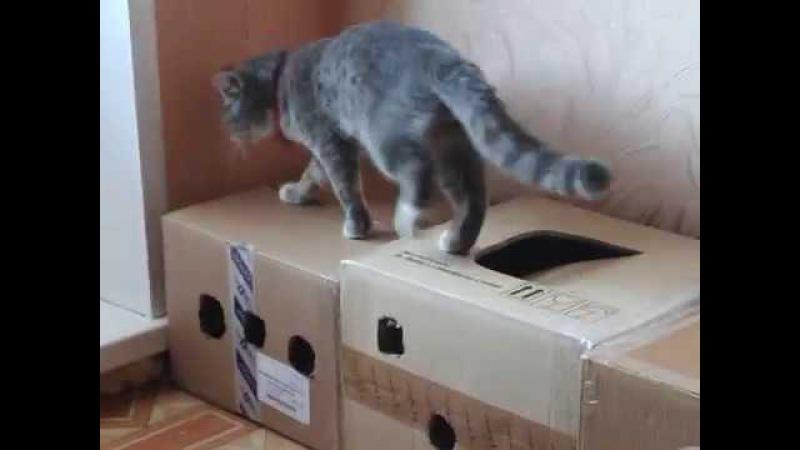 Baksika تبحث عن ماوس لعبة المنطق!Баксик ищет мышку игра Логика!Baksikaみマウスのゲー