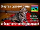 Котёнок жертва сорокаградусного мороза и ОХД конечностей pomogite jivotnomu