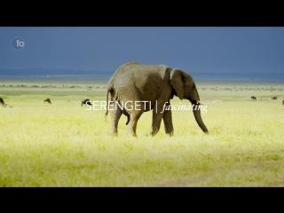 Kenya in 4kurban to wildlife stock footage