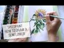 Как нарисовать подсолнух акварелью   Speedpaint: watercolor sunflower. DARJAART