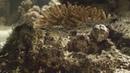 [2] Жители океанов (Царство океанов, Королевство океанов) / Kingdom of the Oceans / Le Peuple des Oceans (2011)