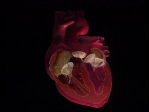серце насос організму