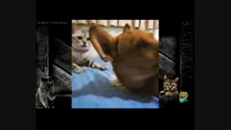 Скачать-Смешные-коты-и-кошки-2016-Приколы-с-котами-и-кошками-2016смотреть-онлайн_144p.3gp