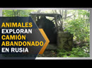 TE HACE REÍR: Animales exploran camión abandonado en selva