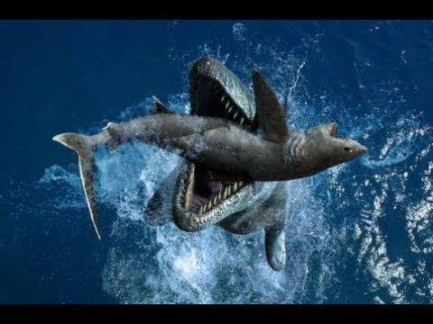 Криптозоологи онемели.Кто пожирает АКУЛ.Неизвестное чудовище обнаружено в океан.Загадки человечества