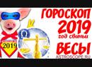 Гороскоп на 2019 год Свиньи Весы гороскоп для знака Зодиака Весы на 2019 год