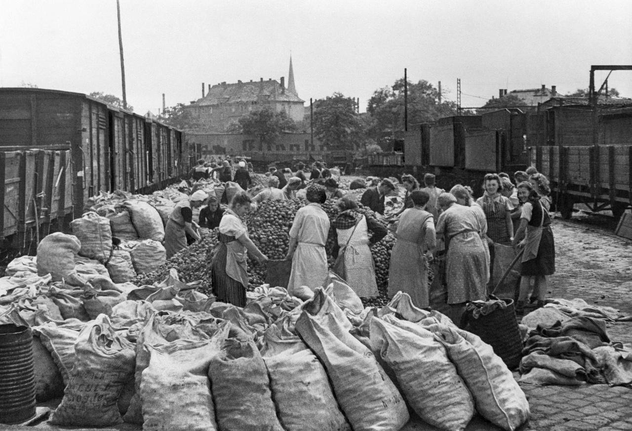 Жители Нью-Йорка получают картошку от советской военной администрации, 19 мая 1948 года.