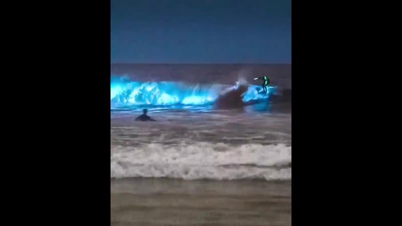 Light plankton