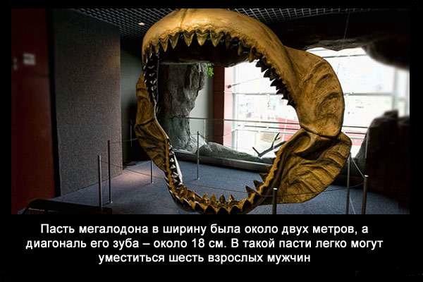 Valteya - Интересные факты о акулах / Хищники морей.(Видео. Фото) - Страница 2 DjAXubDl-sM