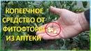 За ВОСЕМЬ рублей обработал от болезней ДВЕ теплицы с огурцами и томатами