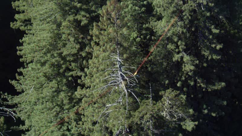 BBC Планета Земля 2006 10 серия Сезонные леса