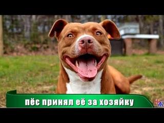 Старушка ПРИЮТИЛА выброшенного ПИТБУЛЯ - в благодарность за доброту пёс поступил как герой