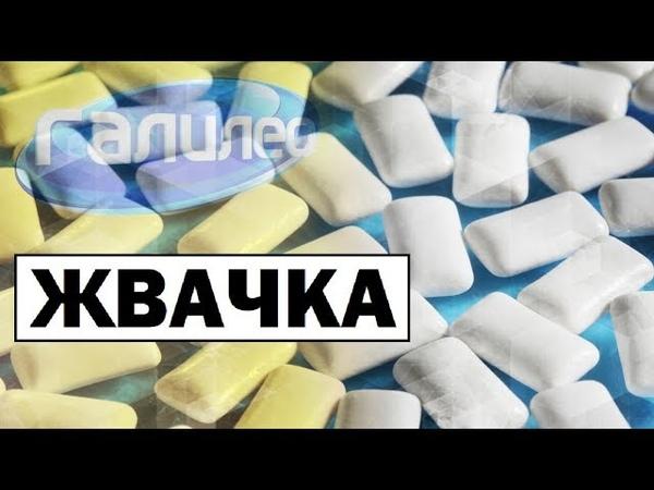 Галилео Жвачка 👄 Chewing gum