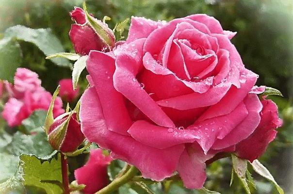 Плейкаст цветы музыкальная открытка, картинки марта красивые
