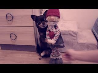 5 интересных трюков для собак