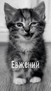 Фотоальбом Евгения Донченко