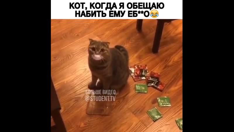 Когда обещаешь коту дать ему пи*дюлей