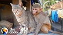 This Wild Baby Monkey is Obsessed With Her Cat The Dodo Wild Hearts