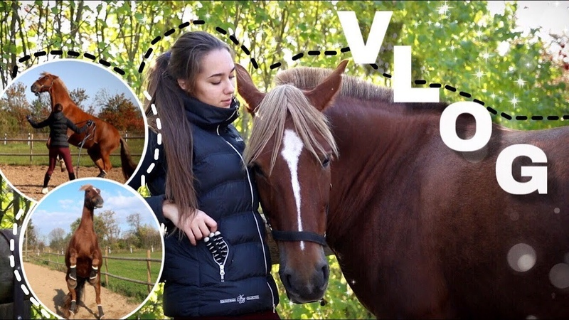 VLOG: Спустя очередной месяц на конюшне | Игры с диким пони