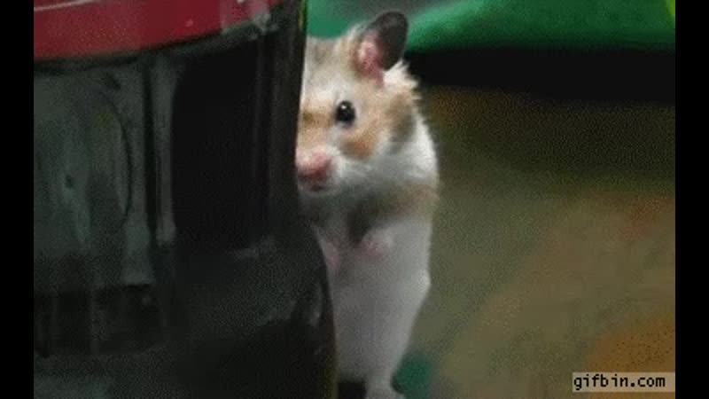 Dramatic hamster behind Coca Cola bottle