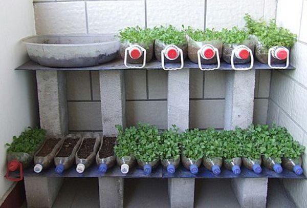 Этапы создания огорода на балконе