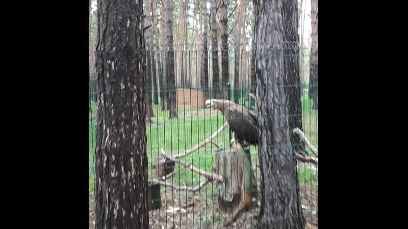 Орлан. Эко-парк Тайга.