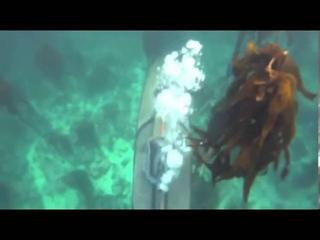 Видео от Каякер Самара Проводник на каяках
