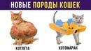 Приколы с животными. НОВЫЕ ПОРОДЫ КОШЕК Мемозг 114