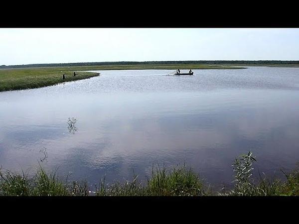 В Югре 25 миллионов мальков пеляди выпустили в Обь Иртышский бассейн