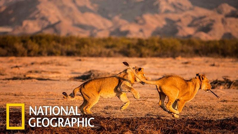 Намиб раскаленный берег Африки Первозданная природа Эдем жизни National Geographic
