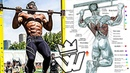 Pull Ups WORKOUT Bodyweight Strength Training