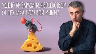 Можно ли заразиться бешенством от трупика полевой мыши - Доктор Комаровский