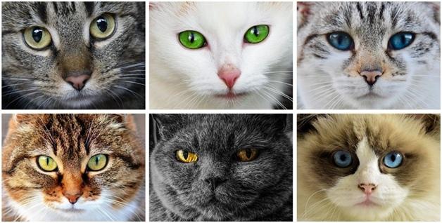 Урок доброты «Эти удивительные кошки», изображение №7