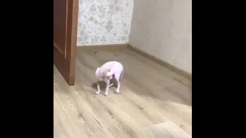 кот увидел себя в зеркале