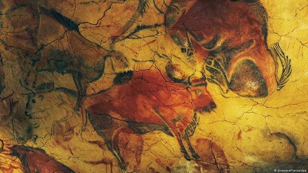 Изображения животных в пещере Альтамира. Испания.