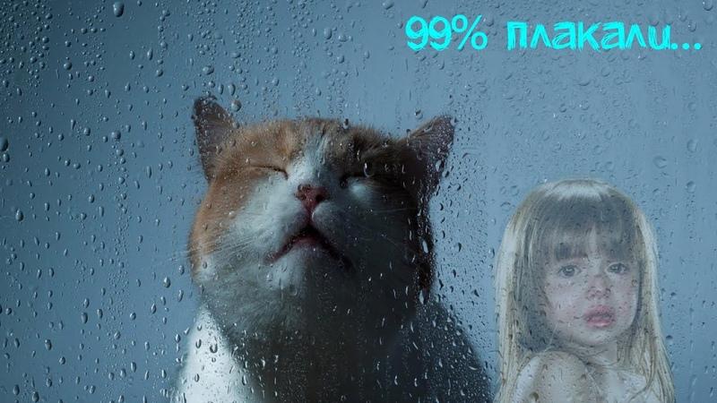 Кот, До слез, Самое грустное видео, Попробуй не ЗАПЛАКАТЬ - Это видео тронуло сердца миллионов