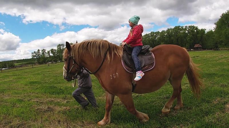 Парк Кудыкина Гора май 2020 Катание на пони лошадке Ля Ля Кормление лам 🐴🐎 🥕🥕😀