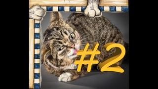 СМЕШНЫЕ КОТЫ Смешная видео нарезка про котов, кошек и котиков 2021! выпуск #2