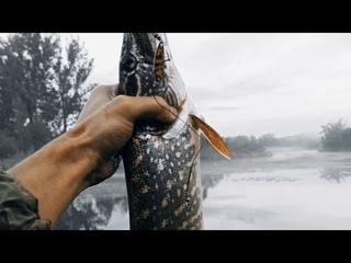 Рыбалка на щуку. Клёв после дождя, клюёт крупная рыба на спиннинг