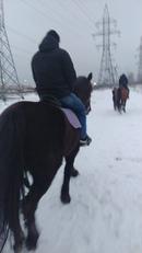 Немного о ковке лошадей и для чего она нужна, вкратце.   Специалисты по лошадям говорят, что наоборо