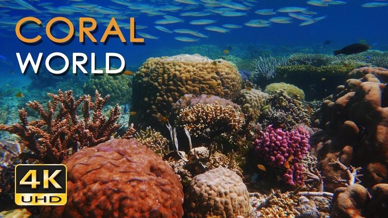 4K Coral World Tropical Reef Fish Relaxing Underwater Ocean Video Sounds No Loop Ultra HD