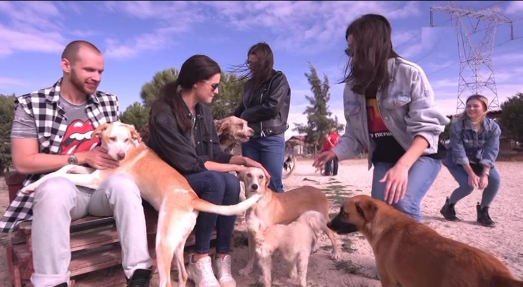Свидание в собачьем приюте Холостяк ТНТ