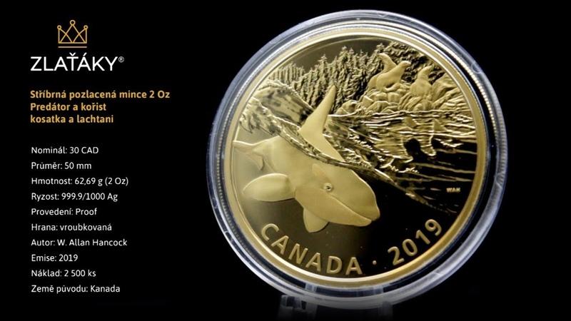 Stříbrná pozlacená mince Predátor a kořist kosatka a lachtani 2 Oz 2019 Proof