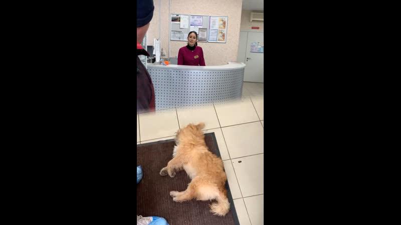 Ветеринар из Нижнекамска отказался осматривать умирающую собаку