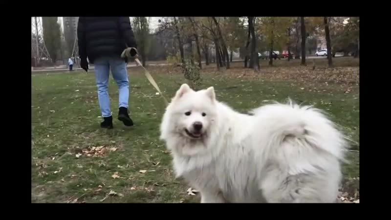 СобакаЙ