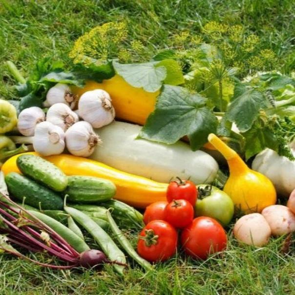 Раствором мыла поливают зеленные овощи и цветочную рассаду, если на них много тли (150 г на 10 л воды