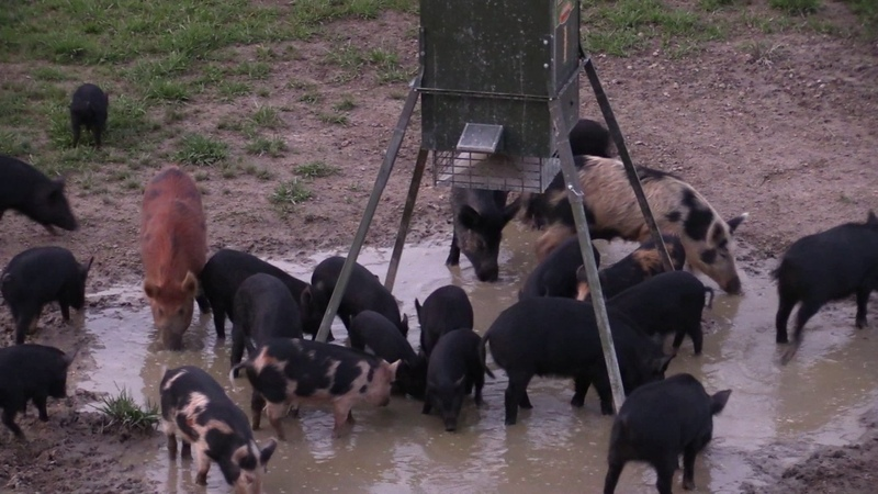2 for 1 Hog Kill March 4, 2017