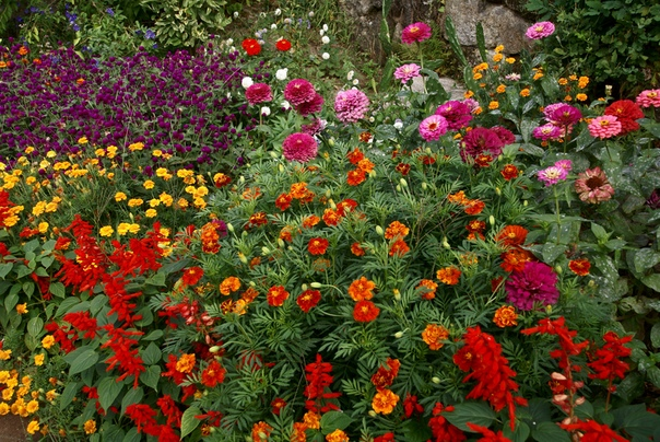Сроки посева однолетних цветов
