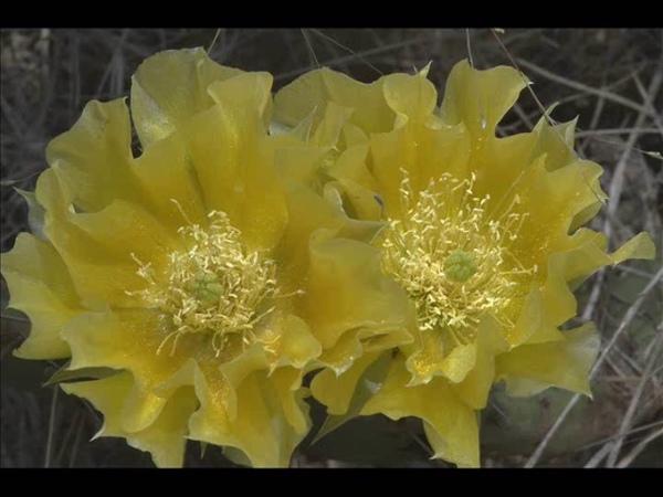 Adriana Ceko dhe Muarrem Herri Mes basmave plot lule